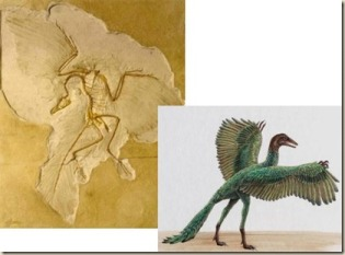 archaeopteryx2_thumb1